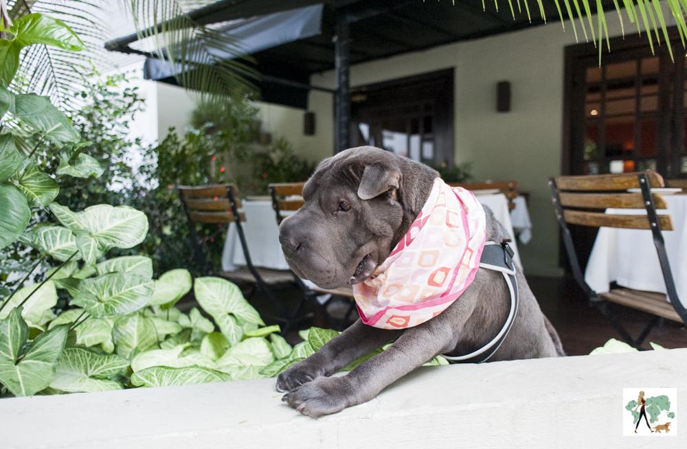 cachorro debruçado em cima de muro da varanda do Ton Ton