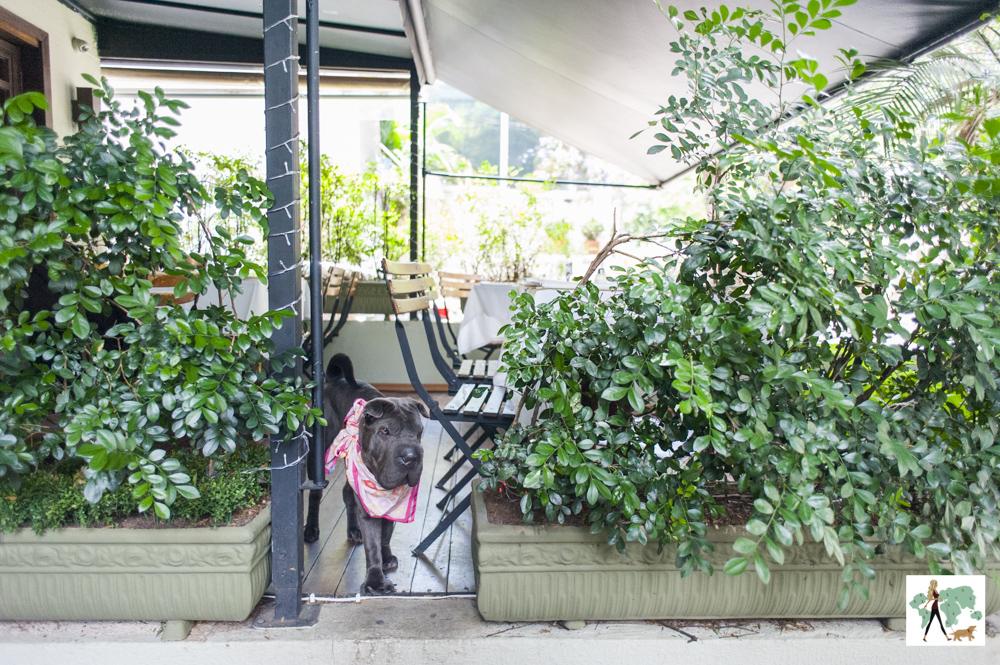 cachorro de pé entre plantas na varanda do Ton Ton