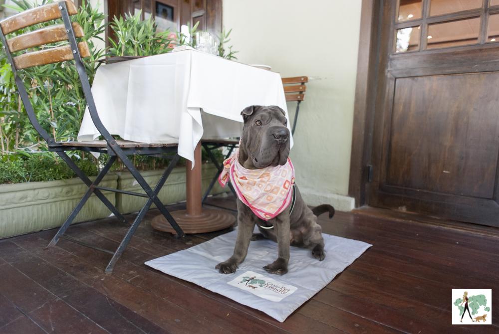 cachorro sentado ao lado de mesa no restaurante Ton Ton