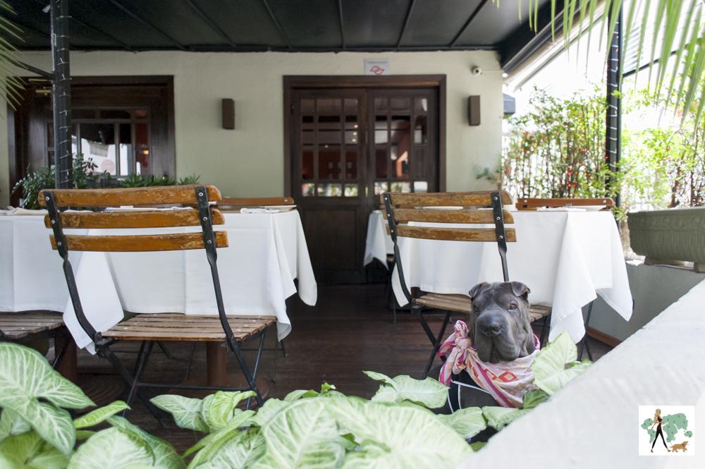 cachorro sentado na varanda do restaurante Ton Ton