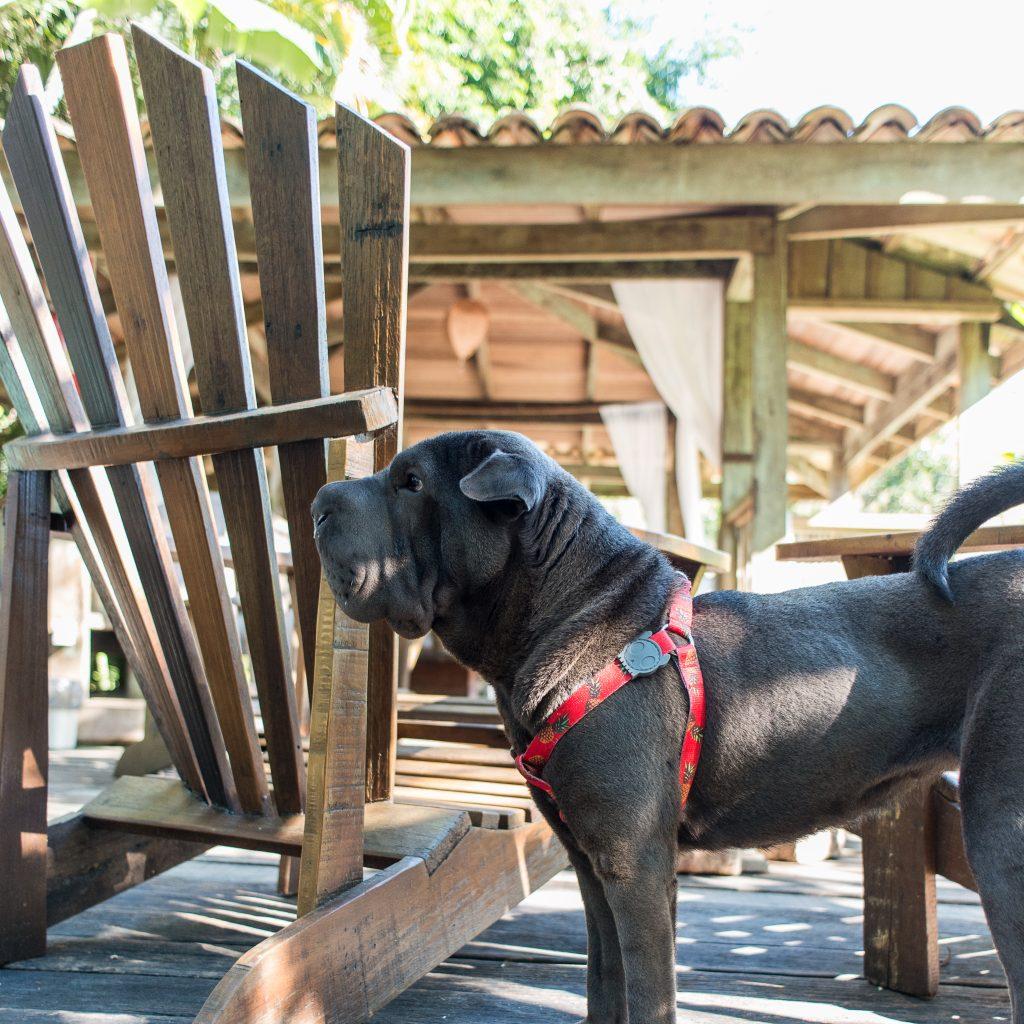 cachorro em pé ao lado de cerca de madeira