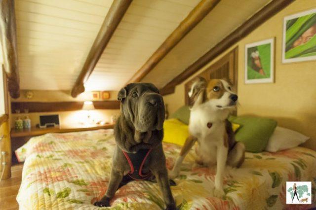 dois cachorros sentados na cama