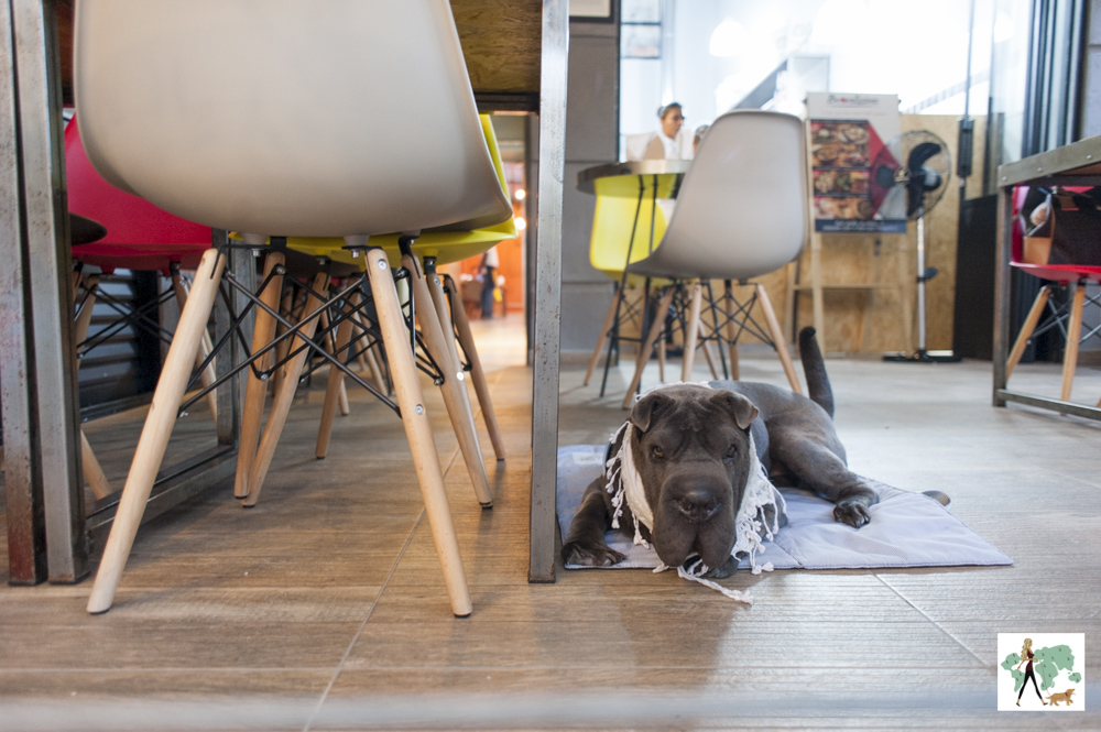 cachorro deitado ao lado de mesa na pizzaria Buoníssimo