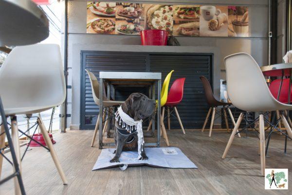 cachorro sentado no deque da pizzaria Buoníssimo