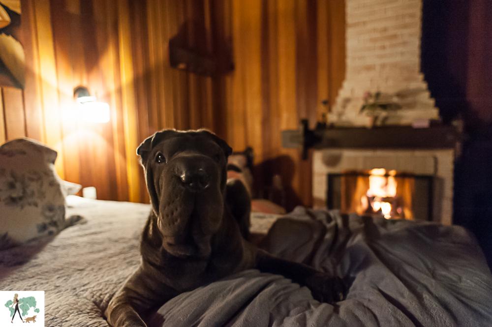 cachorro deitado em cima da cama em pousada pet friendly