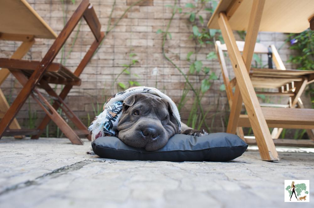 cachorro deitado em colchonete em deque pet friendly do restaurante Fritos e Assados