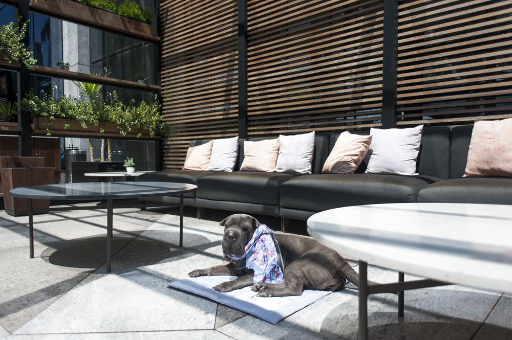 cachorro deitado em lounge de restaurante do hotel Hilton