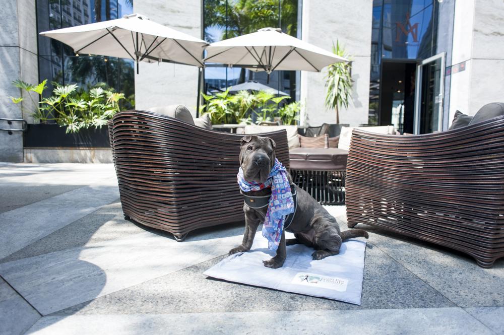 cachorro sentado ao lado de mesas em restaurante do hotel Hilton
