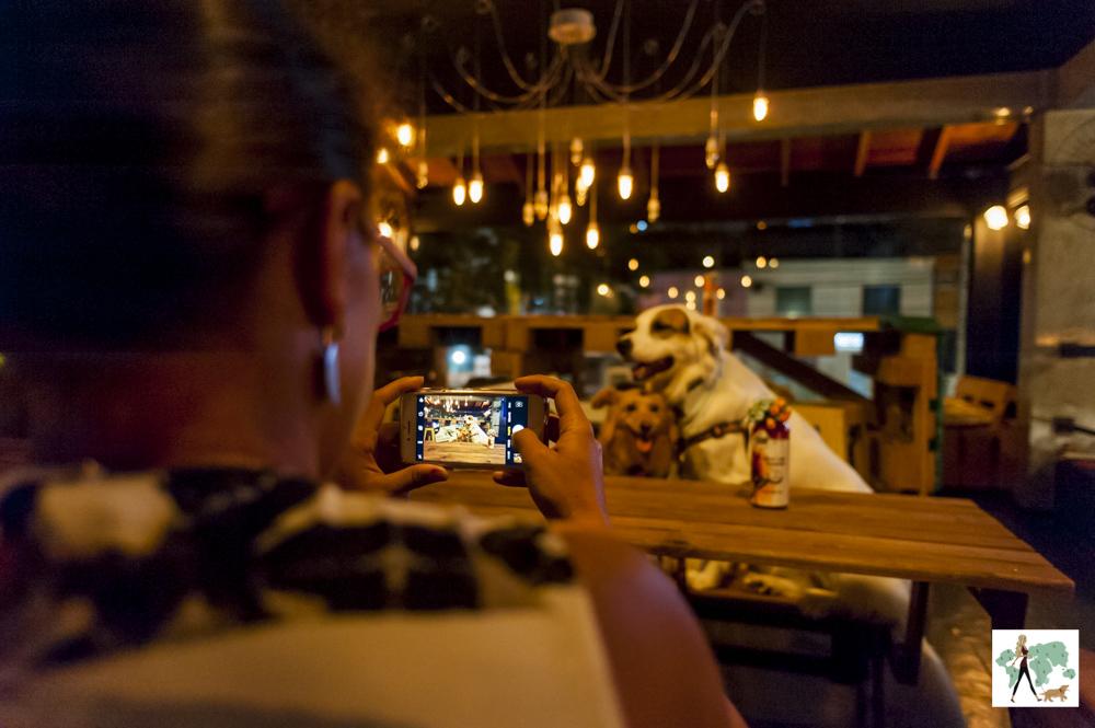 mulher de costas fotografando cachorros sentados em cima de banco