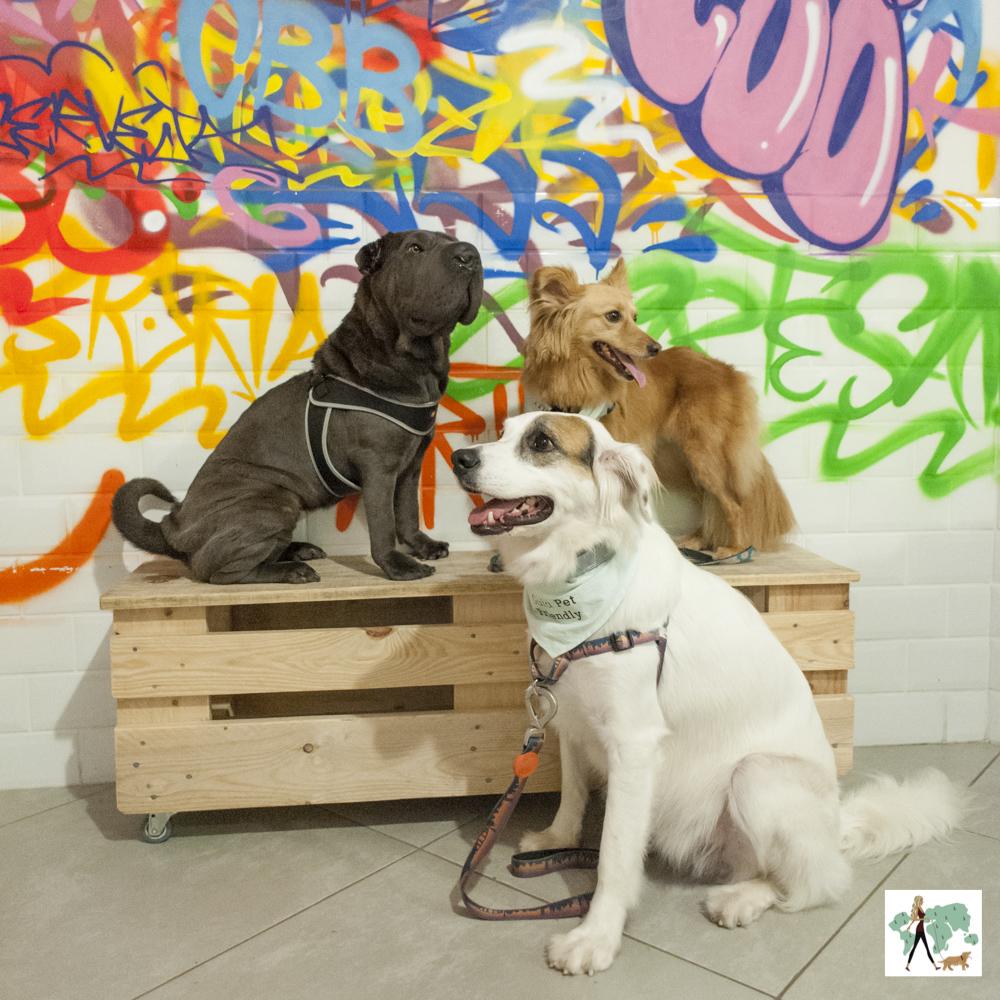 cachorros sentados co grafite colorido na parede de trás