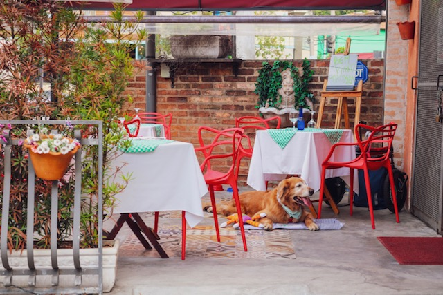 cachorro deitado em varanda de restaurante