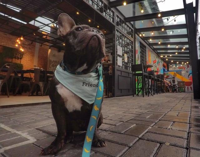 cachorro sentado na entrada de hamburgueria