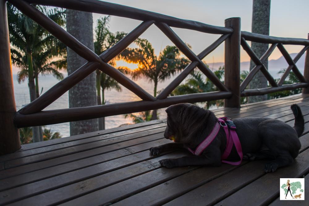 cachorro deitado na varanda olhando o pôr do sol