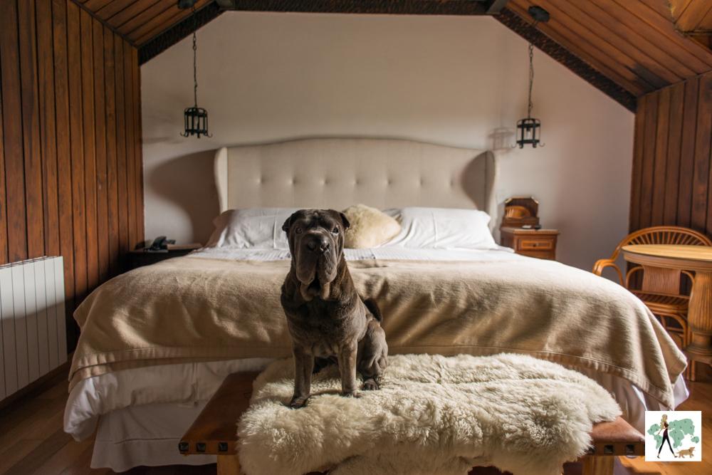 cachorro em quarto do We Hotel