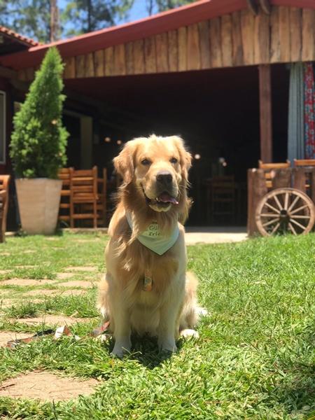 cachorro sentado na grama