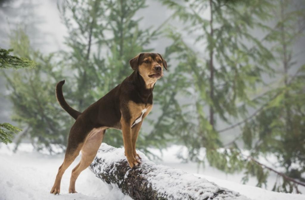 cachorro na floresta nevada
