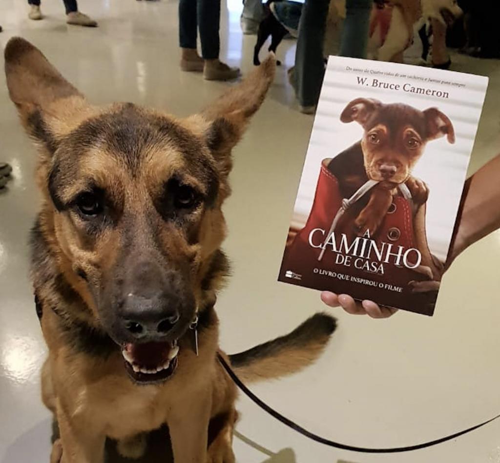 """cachorro ao lado do livro """"A Caminho de Casa"""""""