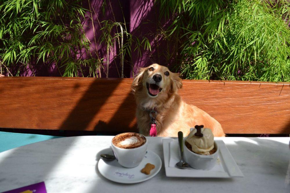 cachorro sentado em um sofá na frente do café