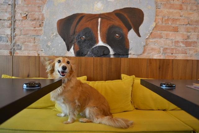 cachorro sentado em cima do sofá amarelo