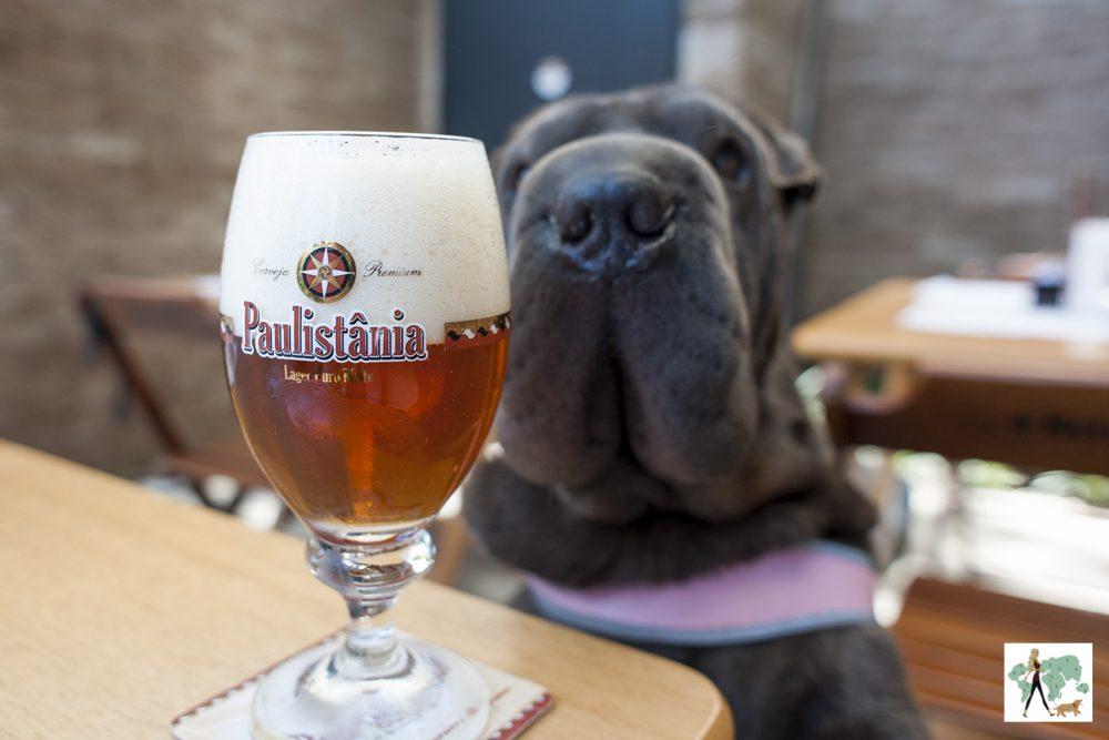 cachorro olhando para copo de cerveja no restaurante Fritos e Assados
