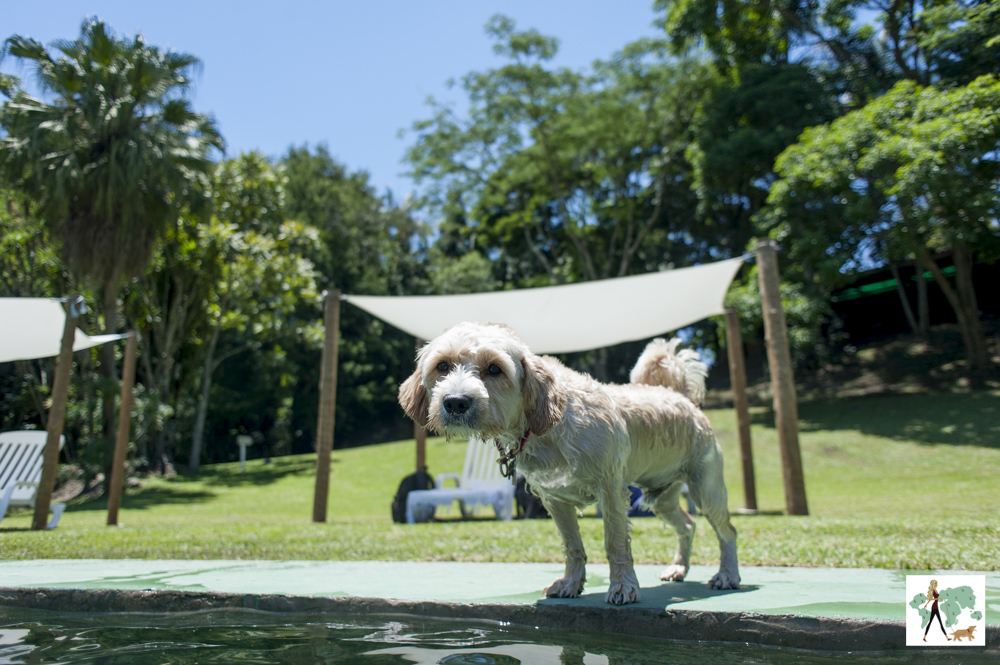 cachorro na beira da piscina da pousada Gaia Viva
