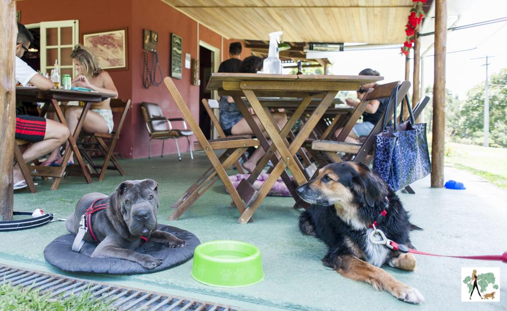 cachorros deitados ao lado de mesa em restaurante da pousada Gaia Viva