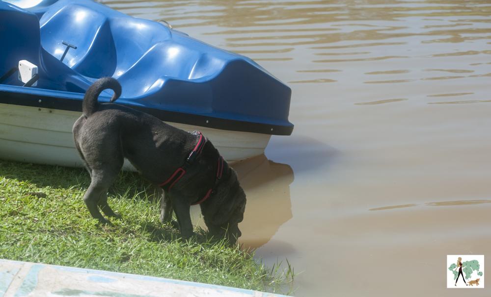 cachorro bebendo água no lado da pousada Gaia Viva