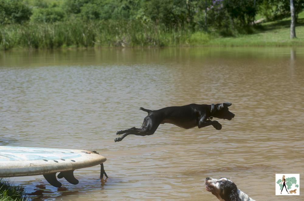 cachorro pulando no lago da pousada Gaia Viva