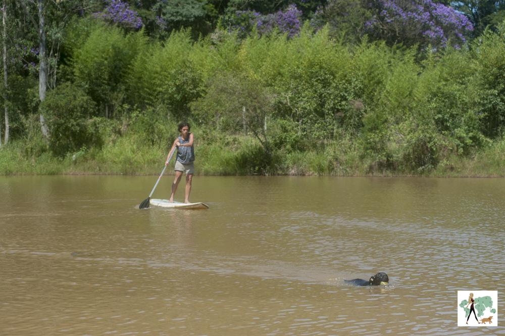 mulher em cima de stand up paddle e cachorro nadando