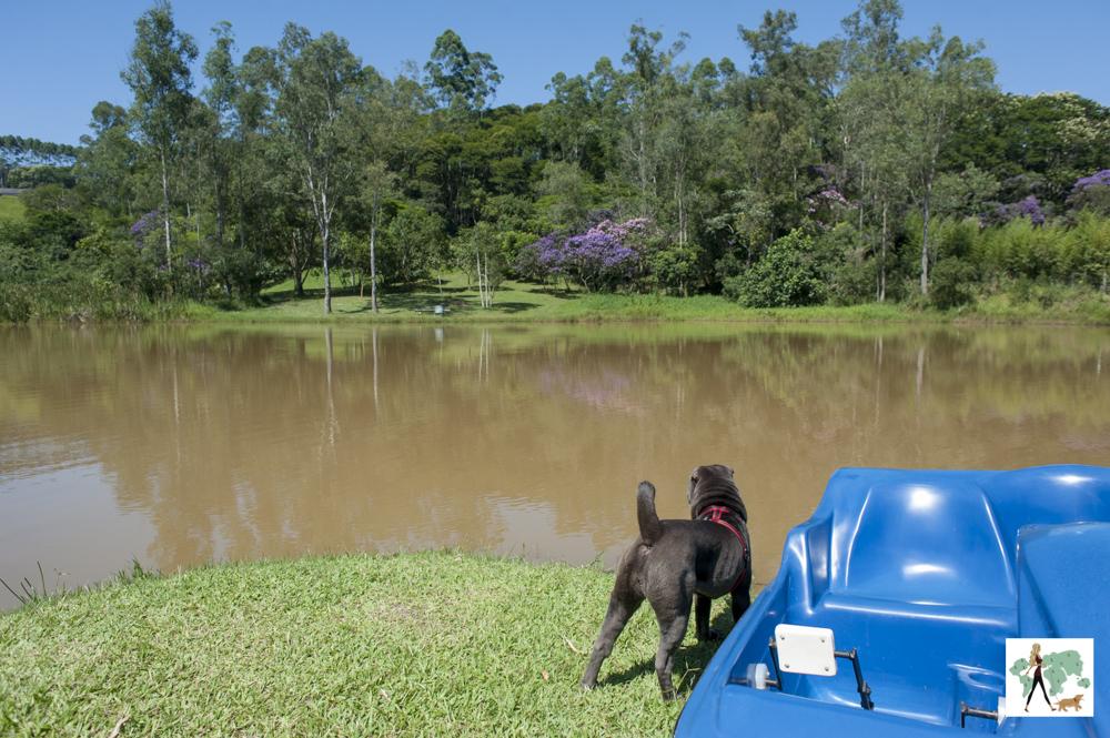 cachorro olhando para lago da pousada Gaia Viva