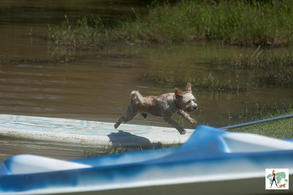 cachorro pulando na pousada Gaia Viva