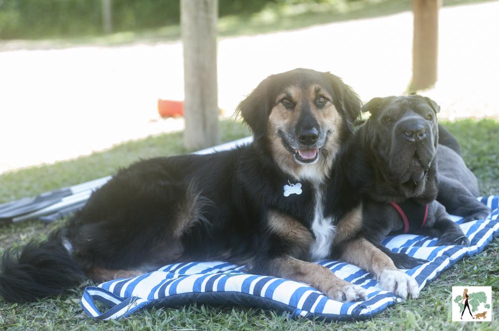 cachorros sentados em cima de colchonete na pousada Gaia Viva