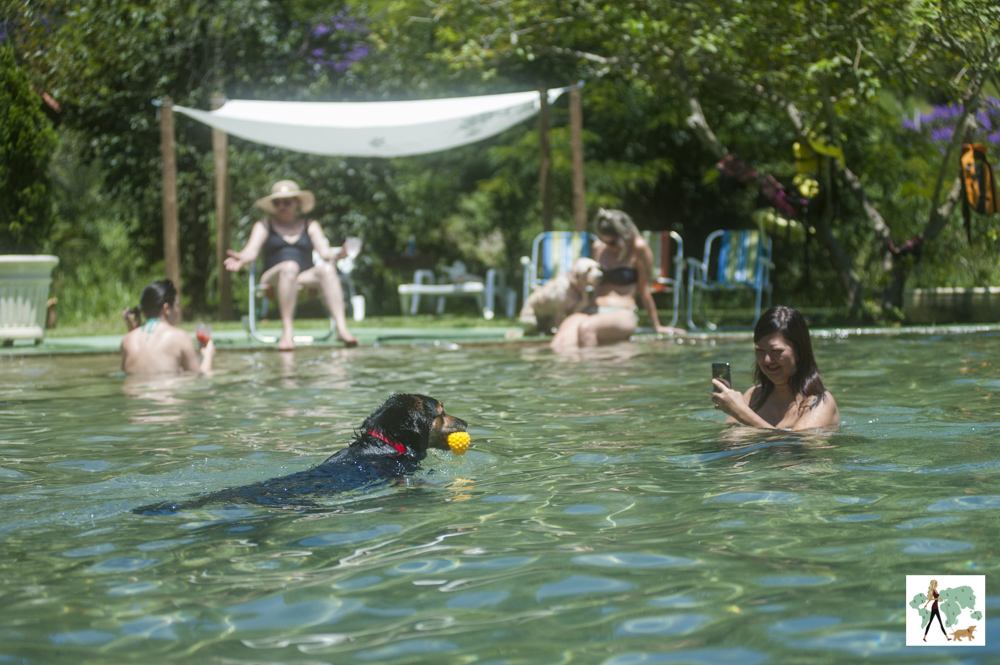 cachorro nadando em piscina e mulher gravando com o celular