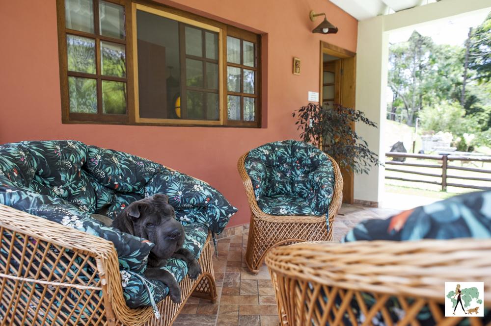 cachorro deitado em varanda da pousada Gaia Viva