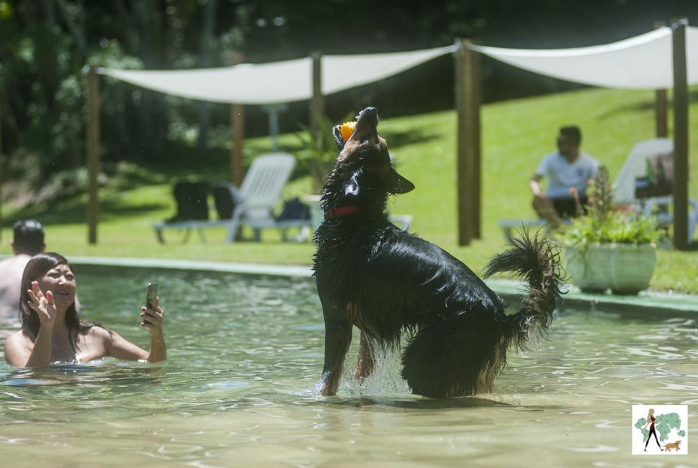 cachorro saltando e pegando bolinha e mulher dentro da piscina