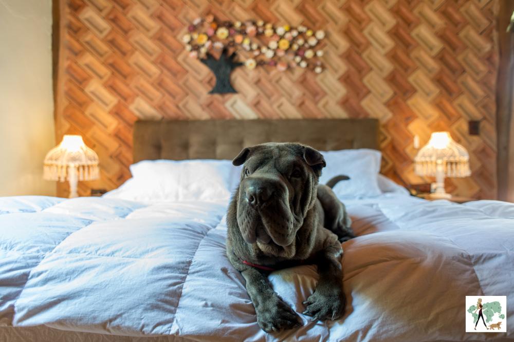 cachorro deitada na cama da Pousada Pegada da Onça