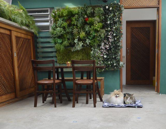 cachorro e gato deitados