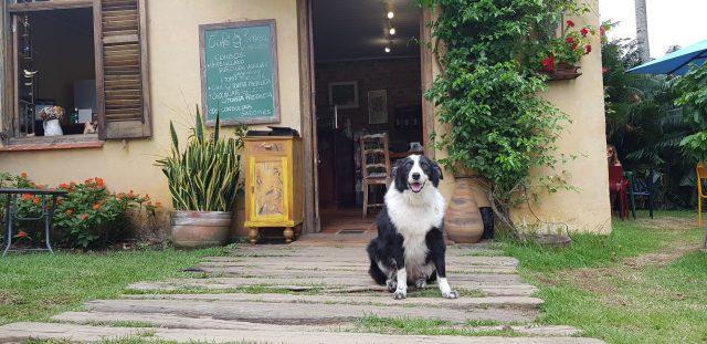 cachorro sentado na frente de casa amrela