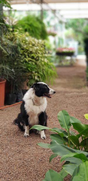 cachorro no meio das plantas