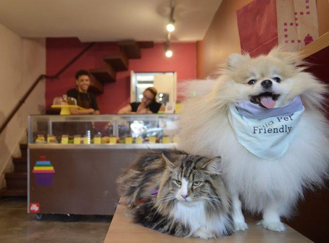 um gato e um cachorro na loja de doces