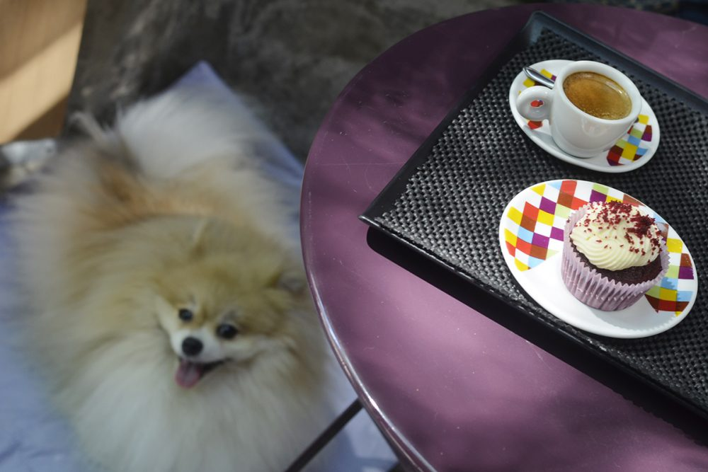 cachorro olhando para cupcake na mesa