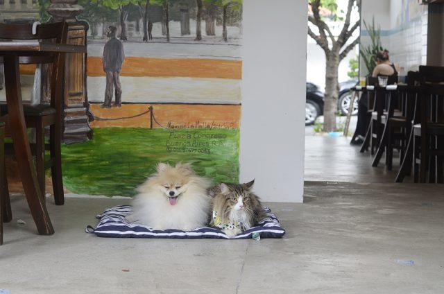 um cachorro e um gato deitados