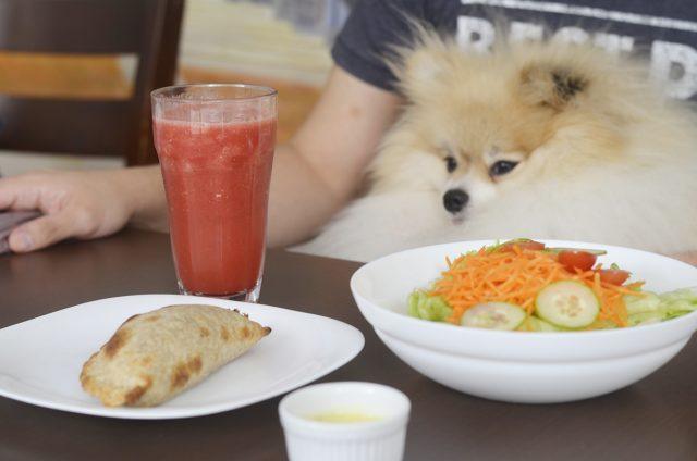 cachorro olhando para copo de suco e empanada