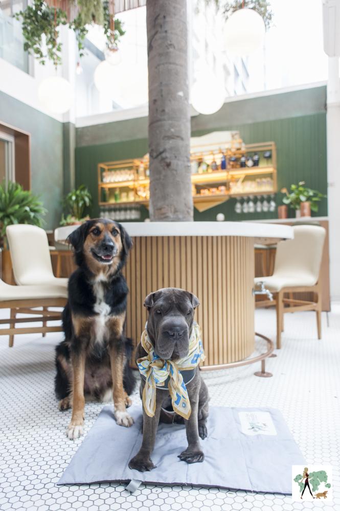 dois cachorros na varanda do Mimo Restaurante