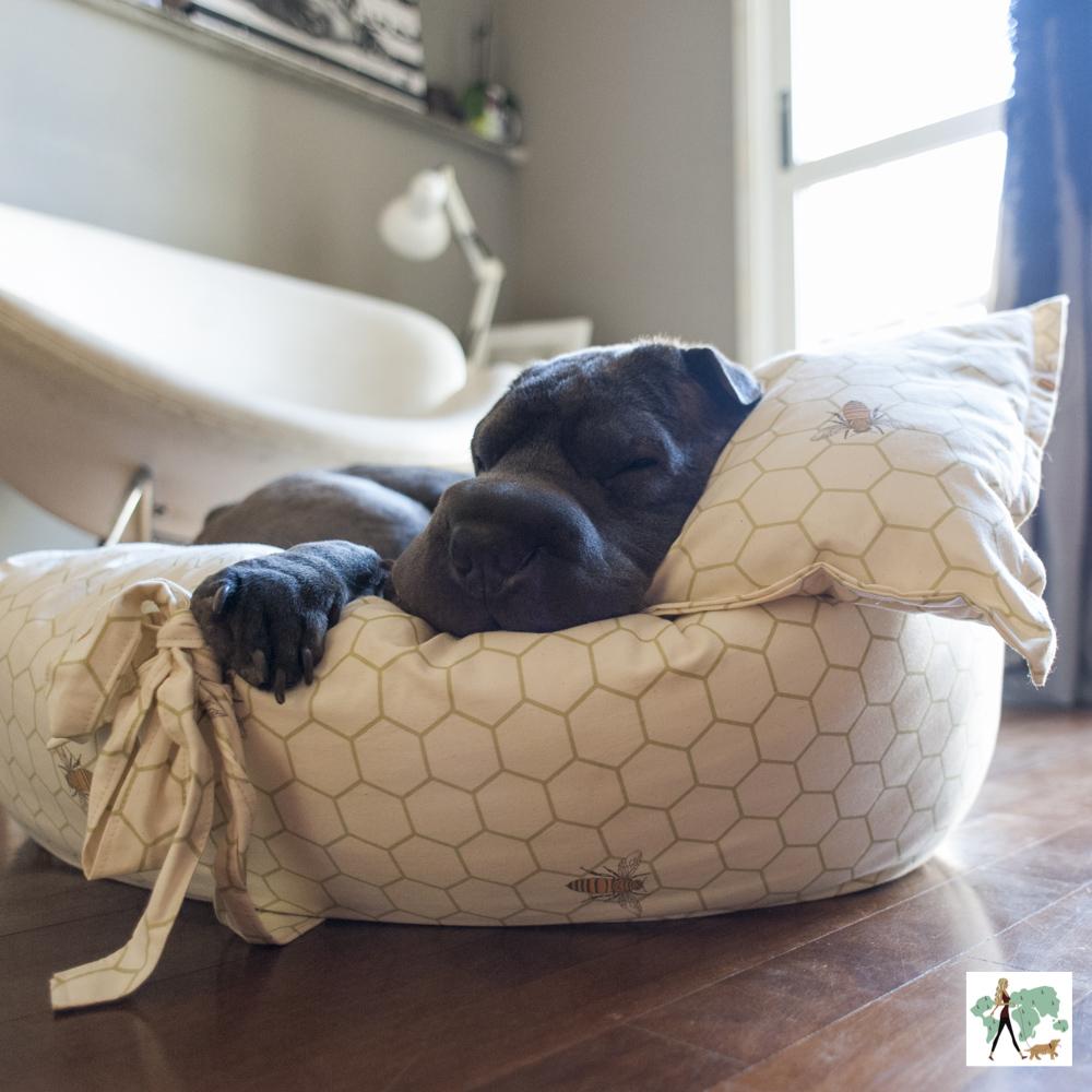 cachorro dormindo em cama de cachorro