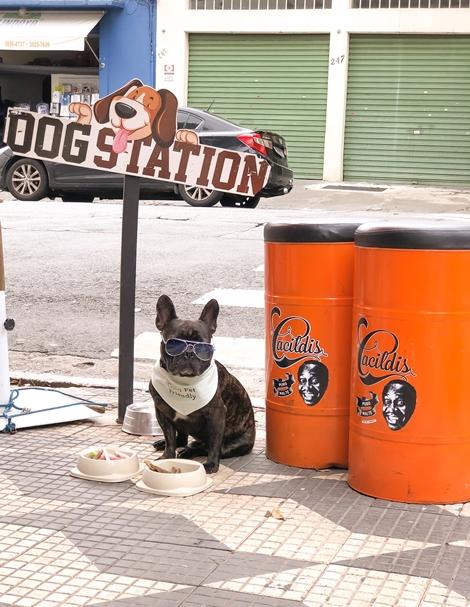 cachorro sentado na calçada com pote de comida e água