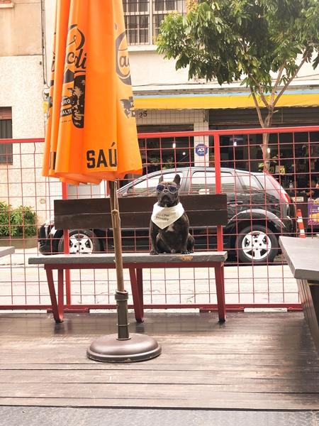 cachorro sentado no banco e uma barraca laranja
