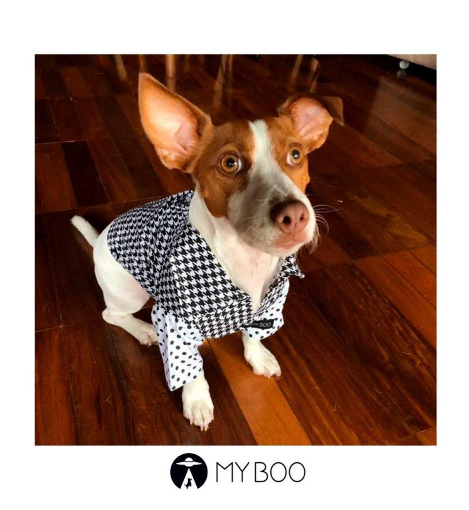 cachorro com camisa
