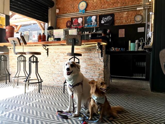 dois cachorros dentro de um bar