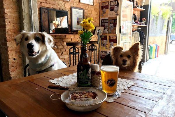 dois cachorros sentados na mesa